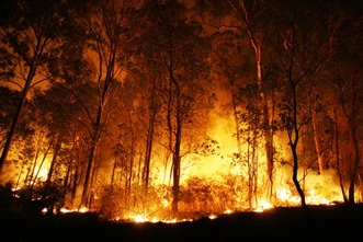 article_images/forest_fire_879502584.jpg